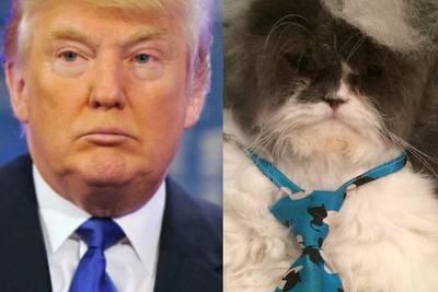 В США новый флэшмоб: люди выкладывают фото животных с причёской