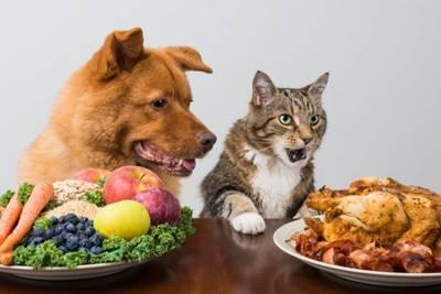 Стартап начал выращивать мясо мышей для кошек вегетарианцев