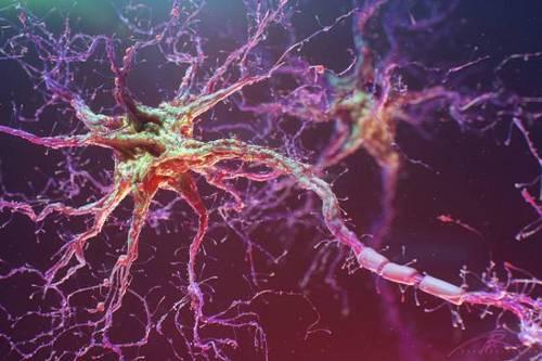 Ученые вырастили нейронную сеть из человеческих стволовых клеток